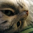 Close up of cat's face — Stock Photo #7784703