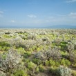 High Desert Sage Brush North Central New Mexico Wide Angle — Stock Photo #7894401
