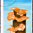 São Tomé Postage Stamp Oyster Mushroom, Pleurotus Ostreatus Tr - Stock Photo