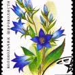 Stock Photo: RussiPostage Stamp Flower Giant Bellflower CampanulLatifolia