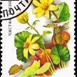 Soviet Russia Stamp Yellow Lesser Celandine Ranunculus Ficaria - Stock Photo