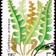 Russia Postage Stamp Hart&#039;s-Tongue Fern, Asplenium Scolopendrium - Stock Photo