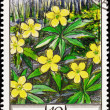 Soviet Russia Post Stamp Ranunculus Yellow Buttercup Oak Forest - Stock Photo