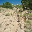 Desert Wash Arroyo Showing Erosion New Mexico — Stock Photo #7894694