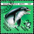 Post Stamp Bottlenose Dolphin Tursiops Truncatus — Stock Photo
