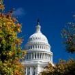 U.S. Capital Building Washington DC Autumn Yellow - Stock Photo