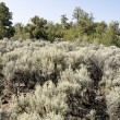 Stock Photo: Sagebrush Outside Taos, New Mexico, USA