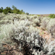 Stock Photo: Sagebrush on Hillside in New Mexico Desert, USA