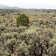 Stock Photo: Sagebrush NM Desert Sangre De Cristo Mountains