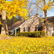 House Philadelphia Yellow Fall Autumn Leaves Tree — Stock Photo #7895113