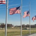Row American Flags Flying Half Mast Washington DC — Stock Photo