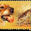 Russian Retriever Dogs Hunting - Stok fotoraf