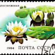 European White Waterlily, Nymphaea alba — Stock Photo #7896062