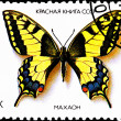 old world swallowtail papilio machaon — Stock Photo