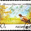 Pheasant Prioksko-Terrasny Nature Reserve — Stock Photo