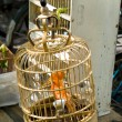 Orange Birds in Cage Pet Market Shanghai China Maybe Canary - Stock Photo