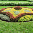 Stock Photo: Abstract Shape Created With Plants in Ornamental Garden