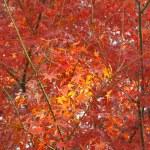 petite tache jaune laisse dans le domaine des feuilles rouges — Photo #7896345