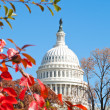 Stock Photo: Autumn at U.S. Capital Building Washington DC Red Leaves