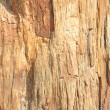 Close-up Full Frame Petrified Wood Bark — Stock Photo #7896516