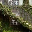 Stock Photo: Ivy Covered Staircase Outside Home Savannah GeorgiWrought Iron
