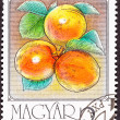 Post Stamp Ripe Orange Apricots Tree Branch Leaves — Foto Stock