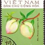 Vietnamese Post Stamp Peach Prunus Persica Branch — Stock Photo