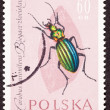 Stock Photo: Stamp Carabus Auronitens Duronitens Green Beetle