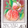 Stock Photo: Hungary Post Stamp Ripe Pink Peaches Branch Leaves