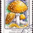 Post Stamp Amanita Pantherina Panther Cap Mushroom — 图库照片