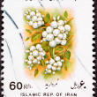 Canceled Iranian Postage Stamp White Berries Sorbus glabrescens - Stock Photo