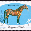 Canceled Hungary Postage Stamp Hungarian Horse Breeds Furioso Is — Stok fotoğraf