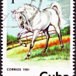 Canceled Cuban Postage Stamp Majestic White Horse Standing in Pa — Stock Photo