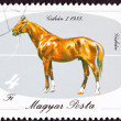 Canceled Hungary Postage Stamp Hungarian Horse Breeds Gidran Iso — Stockfoto