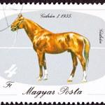 Ungarn Briefmarke ungarische Pferd Bruten Gidran Iso abgebrochen — Stockfoto