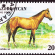 Canceled Azerbaijan Postage Stamp Brown, Akhal-Teke Breed Horse - Stock Photo