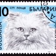 Canceled Bulgarian Postage Stamp Fuzzy Longhaired Himalayan Cat — Stock Photo #7897154