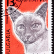 Canceled Bulgarian Postage Stamp Shorthaired Siamese Cat Breed - Stock Photo