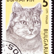 Постер, плакат: Canceled Bulgarian Postage Stamp Shorthaired Tiger Stripe Cat Br