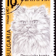 Stock Photo: Canceled BulgariPostage Stamp Fuzzy Longhaired PersiCat Br