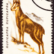 Romanian Postage Stamp Goat, Antelope Chamois, Rupicapra Rupicap - Stock Photo