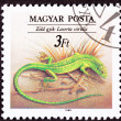 Canceled Hungarian Postage Stamp European Green Lizard, Lacerta — Stock fotografie
