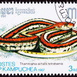 Cambodian Postage Stamp San Francisco Garter Snake Thamnophis Si - Stock Photo