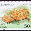 Azerbaijan Postage Stamp Turtle Mata Mata- Chelus Fimbriatus Lea - Stock Photo