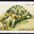 Canceled AzerbaijPostage Stamp Yellow Hermann's Tortoise Test — Stock Photo #7897222