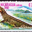 Canceled Nicaraguan Postage Stamp Standing American Crocodile Cr - Stock Photo