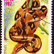 Canceled Nicaraguan Postage Stamp Coiled Snake Red Tailed Boa Co — Stock Photo
