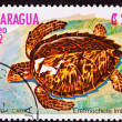 Canceled Nicaraguan Postage Stamp Hawksbill Sea Turtle Eretmoche — Stockfoto