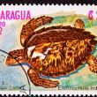 ������, ������: Canceled Nicaraguan Postage Stamp Hawksbill Sea Turtle Eretmoche