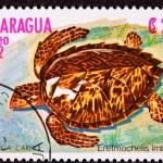 Постер, плакат: Canceled Nicaraguan Postage Stamp Hawksbill Sea Turtle Eretmoche